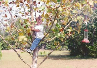 My Tree-Climbing Toddler